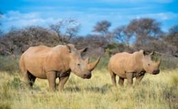 Les Grands Explorateurs - AFRIQUE DU SUD